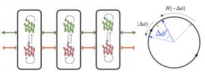 A Mathematical Model Reveals Long-Distance Cell Communication Mechanism